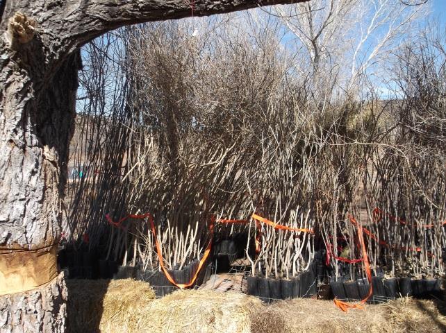 Habitat shrubs and trees